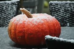 Seasonal Transition (Serenity Shots) Tags: snow pumpkin weather weer sneeuw schnee pompoen koud brr canon canoneos77d canon77d eos fotografie kiekjes 2lazytomakesoup winter