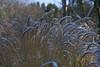 Daresbury Laboratory (joanjbberry) Tags: daresbury daresburylaboratory snow winter winterscene landscape grass