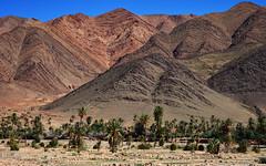 Wadi 23 (orientalizing) Tags: antiatlas colorful desert desktop featured jagged landscape morocco palmtrees rocky striations tighemart