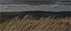 m'ont saint Michel de braspart, Finistère. (@lefredphotos) Tags: paysage bretagne mont darée chapelle bzh finistere britany france