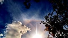 "SunShine ""Ring Halo"" ! (jlynfriend) Tags: phonephoto tree sun sunring clouds sky sunhalo morning"