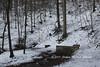 1502Quelle052 (Stefan Heinrich Ehbrecht) Tags: quelle kraftort buch wald selva forest foret buche fagus buchen buchenwald