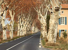 Route du Midi (Jolivillage) Tags: jolivillage strada road arbres trees alberi platanes planetrees automne autumn autumno geottaged picturesque hérault aude languedoc languedocroussillon occitanie france europe europa francia