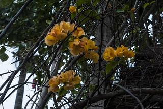 FIORI    ----    FLOWERS.    -----     EXPLORE