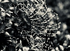 December rain (Kez West) Tags: flickrfriday decemberrain web water drops mono raindrops bokeh winter spiderweb december