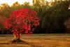 Autumn Dusk (Mansoor Bashir) Tags: orange red yellow green park nature tree leaves golden sunset sundown sunlight pakistan islamabad canon 6d landscape