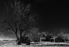 until it sleeps.... (BillsExplorations) Tags: abandoned abandonedillinois abandonedfarm abandonedhouse decay ruraldecay rural ruins forgotten old tree winter snow oncewashome country illinois blackandwhite monochrome sleep norway lonely neglected metallica untilitsleeps