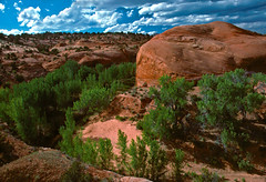 Looking into The Gulch (spotwolf5) Tags: thegulch escalantecanyons southernutah desert