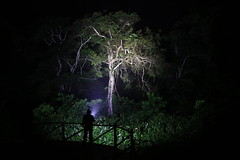 Watching for palm civets (Nandinia binotata) at Ngaga camp. Near Odzala National Park, Cuvette-Ouest, République du Congo, RC (Eloy Revilla) Tags: research night nandiniabinotata