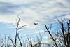 Bird on the Wire (Kansas Poetry (Patrick)) Tags: birds wetlands bakerwetlands kansas heron lawrencekansas patrickemerson