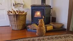 Kitty wärmt sich vor dem Kamin – so eine Klischeekatze!