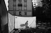 play of shadows (gato-gato-gato) Tags: 35mm ch contax contaxt2 iso400 ilford ls600 noritsu noritsuls600 schweiz strasse street streetphotographer streetphotography streettogs suisse svizzera switzerland t2 zueri zuerich zurigo z¸rich analog analogphotography believeinfilm film filmisnotdead filmphotography flickr gatogatogato gatogatogatoch homedeveloped pointandshoot streetphoto streetpic tobiasgaulkech wwwgatogatogatoch zürich black white schwarz weiss bw blanco negro monochrom monochrome blanc noir strase onthestreets mensch person human pedestrian fussgänger fusgänger passant sviss zwitserland isviçre zurich autofocus