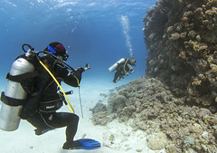 quadruple amputee man takes diving course 31 (KnyazevDA) Tags: disability disabled diver diving deptherapy undersea padi underwater owd redsea buddy handicapped aowd egypt sea wheelchair travel amputee paraplegia paraplegic