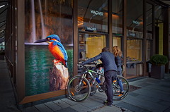 kingfisher (heinzkren) Tags: eisvogel schaufenster window werbung plakat wien vienna austria urban fahrrad auslage advertisement bicycle colors poster street streetphotography kingfisher ricoh juwelen jewelery store storewindow display bird vogel people personen outdoor downtown city paar couple