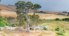 homestead Second Valley SA (David Williamson Photography) Tags: landscape southaustralia australia panorama homestead canon tamron70200vc country sheep trees gumtree secondvalley