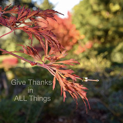 Live in Thanksgiving Daily (~~J) Tags: leaves autumn grateful coral green fall thanksgiving nature