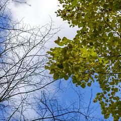 Autumn (Wouter de Bruijn) Tags: fujifilm xt1 fujinonxf35mmf14r autumn fall tree leaves branches naked sky clouds nature outdoor westhove mantelingen walcheren oostkapelle zeeland nederland netherlands holland dutch
