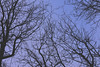 stråskyar två (mitthimlavalv) Tags: mitthimlavalv blue winter fall autumn nature newbie practise sweden 80d