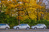 1339_0596FLOP (davidben33) Tags: newyork central park street streetphotos people nature trees bushes leaves colors green yellow sky cloud lake portraits women girl cityscape landscape autumn fall 2017 beaut