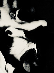 """""""You forget what you want to remember and you remember what you want to forget."""" ―Cormac McCarthy 🐈🐈 (anokarina) Tags: appleiphone5s bw blackwhite monochrome animals pets cats kitties kittens kitty noir california ca southrobertson losangeles la kalifornia"""