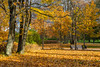 Colorful Foliage In The Autumn Park (AudioClassic) Tags: colors photographythemes photography nopeople autumn colorimage day plant tree lushfoliage season forest woodland landscape nationalpark footpath parkmanmadespace september october branch leaf hiking shade comfortable goldcolored beechtree falling relaxation tranquilscene yellow orangecolor greencolor environment nature outdoors horizontal november estonia