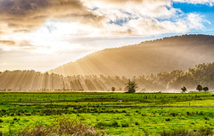 Sun will prevail (amcatena) Tags: field sky forest sunset nature travel blue clouds tree grass new zealand green mountain newzealand