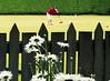 sporting action (Clikrsflicka) Tags: croquet invercargill queenspark southlandnz