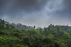 "Munnar (Well-Bred Kannan (WBK Photography)) Tags: wbkphotography wbk ""wellbred"" kannanmuthuraman kannan nikon nikond750 d750 india indian weekendwalk incredibleindia travelphotography travel traveler msb madrasshutterbugs tamronsp1530mmf28divcusd teaestate clouds monsoon munnar landscape sky mountain tree kerala iduki mist fog rain"
