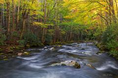 Autumn Canopy (Ping...) Tags: gsmnp greatsmokeymountains smokies fall autumn creek flow moss boulder leaves stream light tree greatsmokeymountainsnationalpark nationalpark