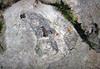 Fossil rugose corals in limestone (Girkin Limestone, Upper Mississippian; Dixon Cave Trail, Mammoth Cave, Kentucky, USA) 16 (James St. John) Tags: rugose coral corals fossil fossils girkin limestone mississippian dixon cave trail mammoth national park kentucky