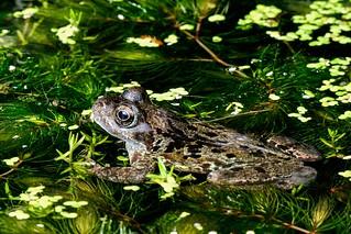 Frog back garden D210bob_DSC1026 F00009