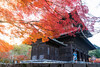 Kyoto in Autumn. (bgfotologue) Tags: photo landscape 風光 leaves 2017 攝影 travel 紅葉 park bgphoto 風景 autumn 京都 foliage redleaves image tourist 楓葉 temple 秋 bellphoto photography imaging momiji maples tumblr 500px 名勝 日本 寺廟 shrine japan kyoto hongkong