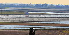 Delta del Ebro.3 (Luis Mª) Tags: tarragona deltadelebro paisaje