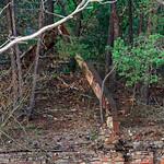 Auf dem Baumkronenpfad thumbnail