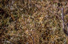 Natural Jackson Pollock (danielnotnow1) Tags: leica leicafilm leicaanalog leicam3 leicam4 summicron50mmv4 fujivelvia50 slidefilm color colour film filmphoto filmphotography 35mm 35mmfilm 35mmfilmphoto analog analogue vintagecamera vintagelens sunny16 colors explore colorsinourworld colorfullaward flickrelite