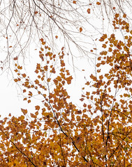 """Yellow Leaves • <a style=""""font-size:0.8em;"""" href=""""http://www.flickr.com/photos/129579084@N06/38266061712/"""" target=""""_blank"""">View on Flickr</a>"""