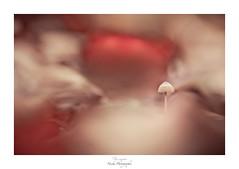 Perdu dans le panache volcanique (Naska Photographie) Tags: naska photographie photo photographe paysage proxy proxyphoto macro macrophotographie macrophoto minimaliste minimalisme mushroom champignon nature forest foret color couleur bokeh flare flou composition artistique art artist ambiance univers fumée volcan éruption fontaine lave montagne créatif création