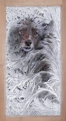 Frosted Portrait (Feeling Better...Still Slow To Comment!) Tags: ddc 2208 asenseofwhimsy photofacefun shizandra window frosty frame white dog bordercollie red chocolate female
