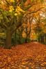 Autumn Colour (Steve Samosa Photography) Tags: autumn sthelens england unitedkingdom gb
