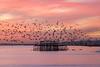 Later the same evening (hehaden) Tags: birds starling commonstarling europeanstarling sturnusvulgaris murmuration pier palacepier brightonpier westpier sea sky sunset brighton sussex sel70200g