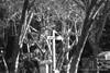 Crux (Lex Arias / LeoAr Photography) Tags: 2017 abstract abstracto art arte artistic bn bw barquisimeto blackandwhite blancoynegro cinematic cinematica fineart iglexariasphotos leoarphotography lexarias luna monochromatic monochrome monocromo moon nikon nikond3100 venezuela