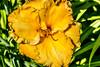 Insel Mainau/Bodensee (karlheinz klingbeil) Tags: lake constance plant pflanze flower germany blume bodensee blüte insel mainau lakeconstance