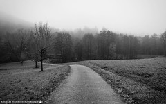 A foggy morning in November. (andreasheinrich) Tags: landscape path forest fields fog autumn november morning blackandwhite blackandwhitephotos cold germany badenwürttemberg neckarsulm dahenfeld deutschland landschaft weg wald feld nebel herbst morgen schwarzweis kalt nikond7000