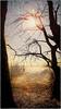 DSC03278bb (fotokunst_kunstfoto) Tags: silhouette silhouett silhouetten schattenbilder umriss kontur konturen schattenriss