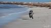 2017 - 11_25 - Animals - Dogs - Gertie 03 (stevenlazar) Tags: beach ocean sand water gertie outerharbor 2017 dog australia southaustralia adelaide waves