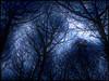 Black forest by night (Adobe Garamond) Tags: forest wood night dark glow wolf moon full howl owl stars nocturnal dangerous lost blue black