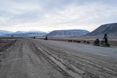 Isole Svalbard – Novembre 2017  Longyearbyen a 78°13′ N 15°33′ E (Maurizio Tattoni....) Tags: svalbard norvegia isolesvalbard longyearbyen freddo coloridelnord artico cani canidaslitta slitta persone paesaggio monti montagne cielo nuvole mauriziotattoni