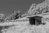 Insel Mainau/Bodensee (karlheinz klingbeil) Tags: mainau germany bodensee monochrome insel lake constance lakeconstance