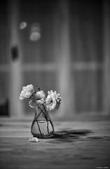 Déliquescence (Mathieu HENON) Tags: leica m240 noctilux 50mm blackwhite noirblanc monochrome france cachan vase fleurs roses bouquet nature morte still life