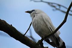 IMG_0853 (jaybluejeans94) Tags: animal animals nature chester zoo chesterzoo bird birds